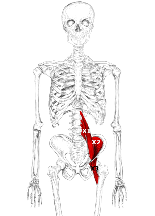 Was wenn bei der Schwangeren zu machen es tut das Unterteil des Bauches und die Lende weh